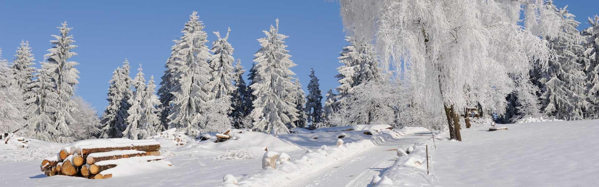 Winterwandern in Waldkirchen – Entspannung und Erholung pur